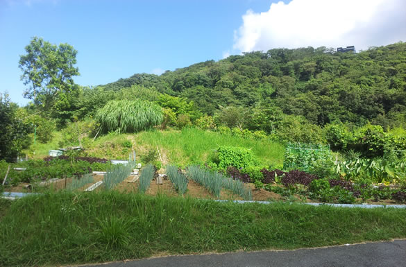 Cycling in Japan - A Miura farm